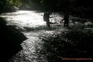 cborneo, Borneo River Tour