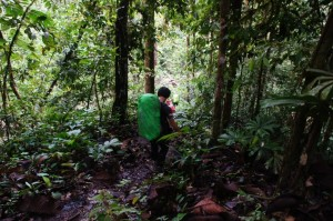 Kalimantan Jungle Trekking