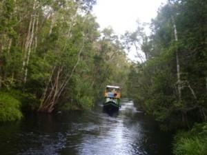Tanjung Puting Boat
