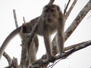 wildlife tours, Borneo Wildlife Adventure