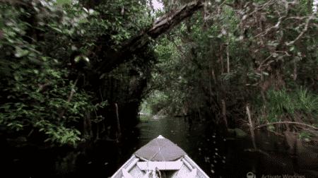 Sabangau National Park