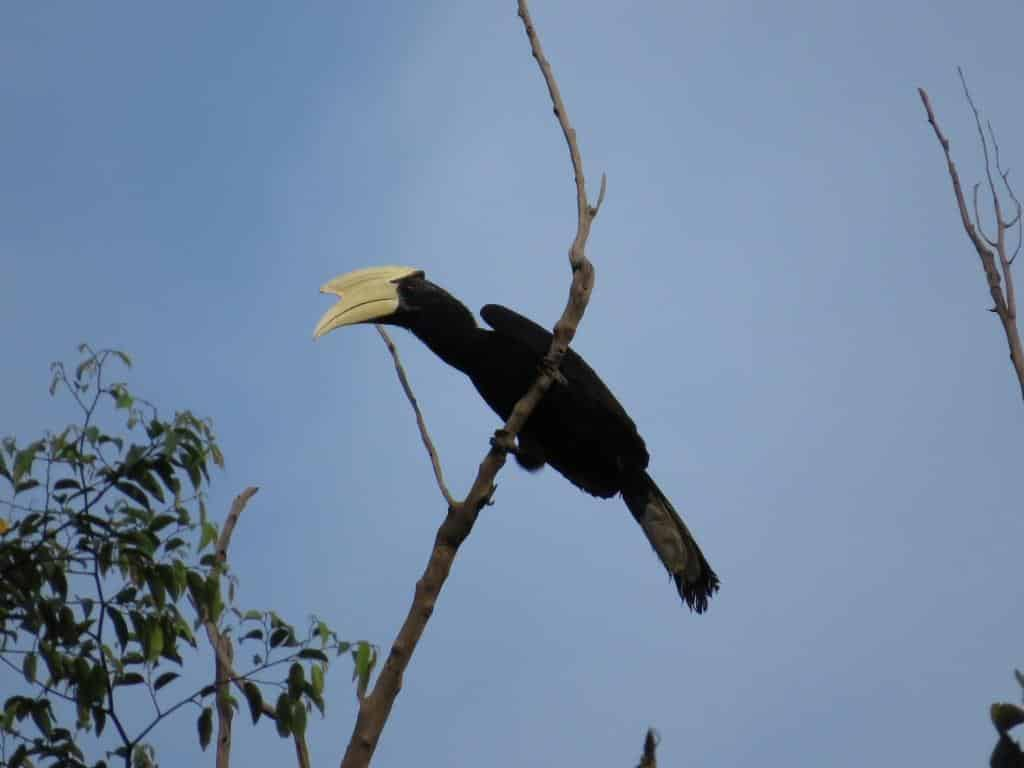Tanjung Puting National Park Birding