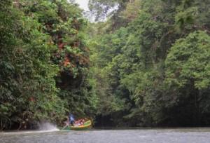 kalimantan jungle  tours
