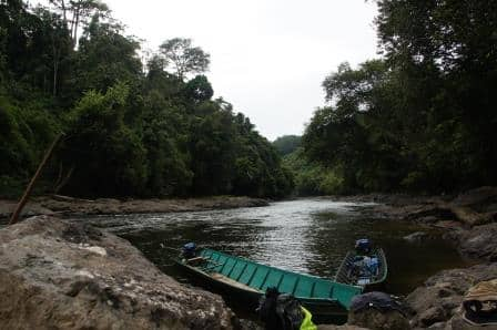 Borneo Jungle River IV