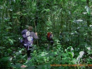 borneo jungle trekking, Borneo Oranutan TOur Package