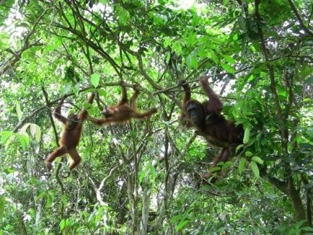 Orangutan & Wildlife Adventure II