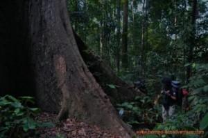 trek in meratus mountain, Trekking Borneo Jungle