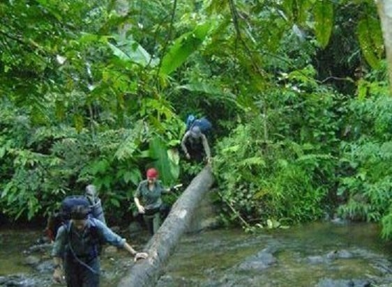 Jungle Trekking & Wild Orangutan Tours