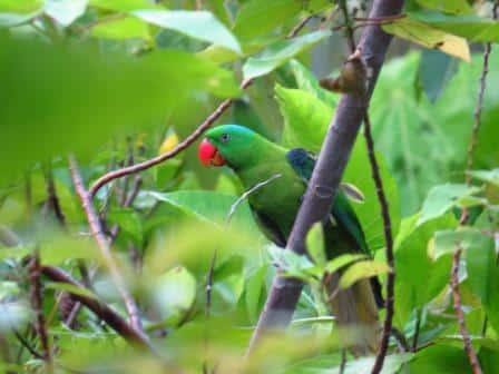 Borneo Birdwatching Highlights