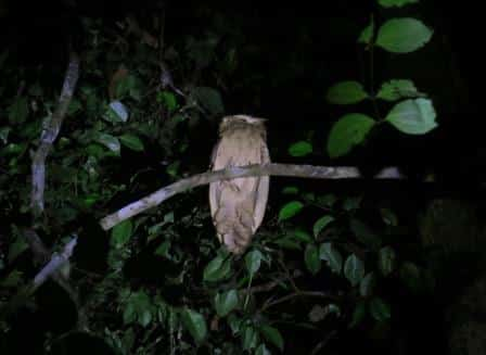 Kalimantan Birdwatching Tours