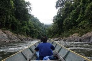 borneo jungle river tours